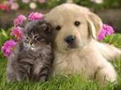 Dharma Cutest Pets