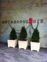 Anthropologie - Del Amo Fashion Center