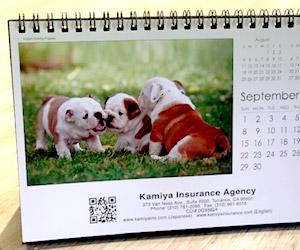Kamiya Insurance